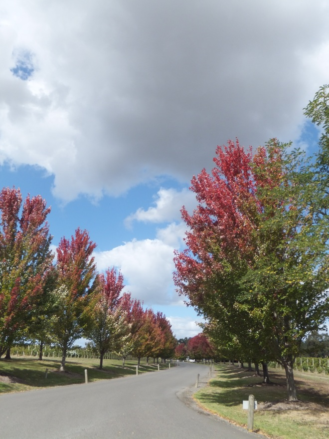 Autumnal colours on the vineyard drive