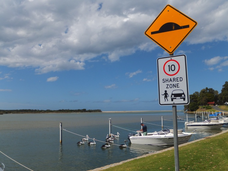 Mallacoota, cleaning fish and feeding the pelicans with the scraps